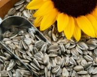 Boost your thyroid health, prevent your risk of heart disease and more by eating more sunflower seeds
