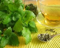 Four therapeutic uses of lemon balm for your mental and overall health