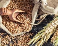 Lower your colorectal cancer risk with whole grains, fibre and activity