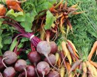 The benefits of inulin-rich foods - from fast weight loss to reduced constipation