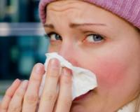 Fight cold and flu this winter with Echinacea!