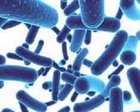 Taking probiotics? Here's how to get the most out of them - for free!