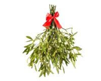 Mistletoe could help fight cancer...